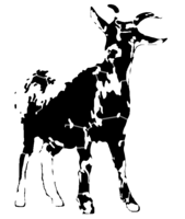 bridged layer 3 of stencil of Goat