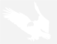 unbridged layer 1 of stencil of Bald Eagle