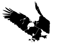 bridged layer 4 of stencil of Bald Eagle