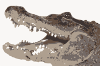 stencil of Alligator