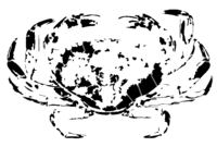bridged layer 2 of stencil of Crab