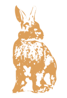 unbridged layer 2 of stencil of Rabbit