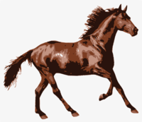 stencil of Horse