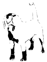 bridged layer 2 of stencil of Beagle