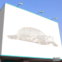 painted stencil art of Turtle