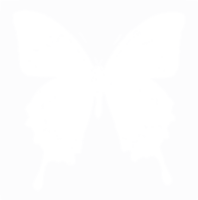 unbridged layer 1 of stencil of Ulysses Butterfly