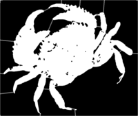 bridged layer 1 of stencil of Dungeness Crab