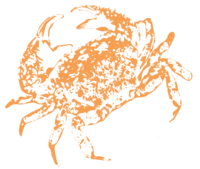 unbridged layer 2 of stencil of Dungeness Crab