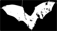 bridged layer 5 of stencil of Bat