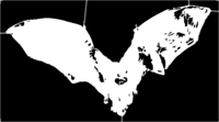 bridged layer 4 of stencil of Bat